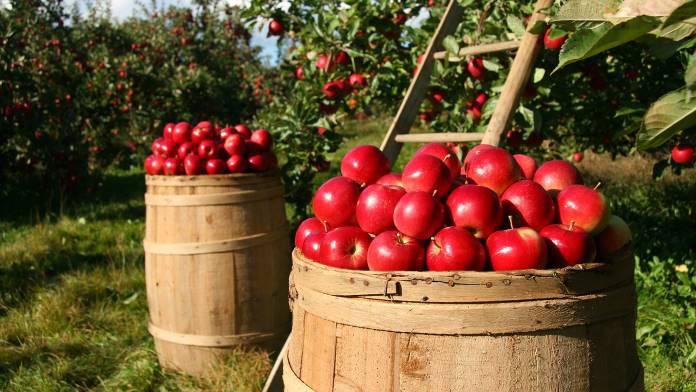 Ermes Agricoltura - Immagine solo indicativa